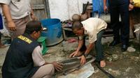Ikan predator jenis Aligator Gar yang ditemukan warga Kabupaten OKI Sumsel di aliran anak Sungai Musi (Dok. Ari Palembang untuk Nefri Inge / Liputan6.com)