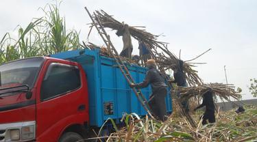 Tebu yang akan dikirim ke Pabrik Gula Candi Baru. (Foto: RNI)