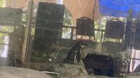 Warganet geram mendapati tikus berada di kandang penguin di Zoo Negara, Selangor, Malaysia. (dok. Facebook/Li Junhao)