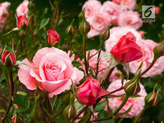 Bunga Mawar Hingga Anggrek Bisa Ungkap Kepribadian Anda Lifestyle Liputan6 Com