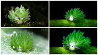 Penampakan menggemaskan siput laut mirip domba. (Bored Panda/Jim Lynn)