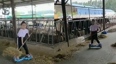 Kasih makan sapi