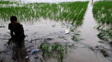 Curah Hujan Tinggi, Kementan Ajak Petani Pasuruan Manfaatkan Asuransi