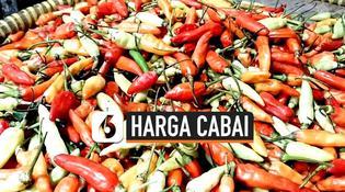VIDEO: Harga Cabai di Tangsel Tembus Rp 115 Ribu Per Kilogram