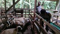 Polisi dan PNS Polri di Polres Pemalang yang hendak memasuki masa purna tugas dibekali kemampuan berwirausaha peternakan domba atau kambing. (Foto: Liputan6.com/Humas Polres Pemalang)