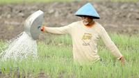 Petani menyiram sawah untuk mencegah hasil tanam mengalami kekeringan.