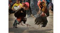 Ketika sedang enak-enaknya menyabung ayam, sebuah petir menyambar tujuh orang penyabung ayam.
