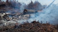 Sisa lahan gambut terbakar di Pulau Rupat yang masih mengeluarkan asap tebal. (Liputan6.com/M Syukur)