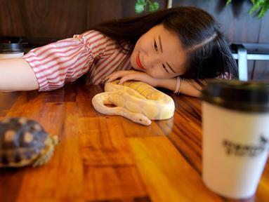 Foto pada 18 Agustus 2018 menunjukkan seorang pelanggan berswafoto dengan ular piton albino di Reptile Cafe, Phnom Penh, Kamboja. Kafe ini dibuka untuk mengubah reputasi kadal dan ular di kalangan orang yang tidak suka reptil. (AFP/TANG CHHIN Sothy)