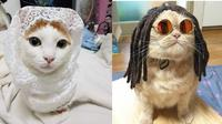 6 Foto Kucing Berdandan Ini Kocak, Bikin Geleng Kepala (sumber: Instagram.com/kucing.receh)