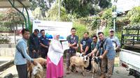 Penyaluran hewan kurban dari PT Antam Tbk dilaksanakan di lima wilayah di Indonesia.