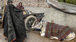 Seorang pemilik bersiap menyelimuti sapinya yang sudah ditutupi selimut di kawasan lama New Delhi, India pada 21 Januari 2020. Hal tersebut dilakukan untuk melindungi sapi agar tetap hangat selama bulan-bulan musim dingin. (Photo by Sajjad HUSSAIN / AFP)