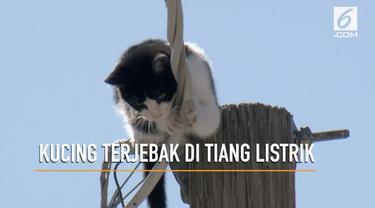 Penyelamatan seekor kucing yang beberapa hari terjebak di atas tiang listrik.