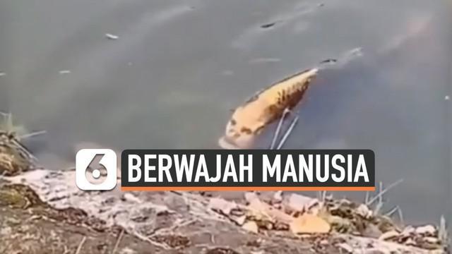 Beredar video yang membuat heboh media sosial. Video tersebut menunjukkan seekor ikan mas yang dianggap memiliki wajah seperti manusia. Ikan tersebut ditemukan seorang turis di danau Kunming, China.