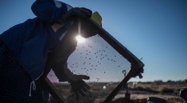 Seorang wanita lansia, Clara Maitse menyaring kotoran dan tanah saat mencari berlian di Kimberley, Northern Cape, Afrika Selatan (5/6). Clara Maitse adalah seorang wanita berusia 77 tahun yang merupakan bekas penambang ilegal. (AFP/Mujahid Safodien)