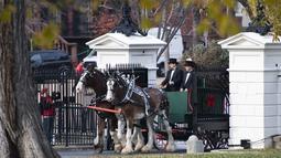 Kereta kuda yang membawa pohon Natal resmi Gedung Putih tiba di Gedung Putih, Washington, Senin (19/11). Pohon cemara setinggi hampir 6 meter itu akan dipajang di Ruang Biru Gedung Putih sejak tahun 1966. (Jim WATSON / AFP)