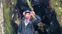 Warga Kerinci berfoto di Pohon bolong besar di jalur pendakian Gunung Kerinci. (Liputan6.com/Gresi Plasmanto/Dok. Ferdi Andrea)