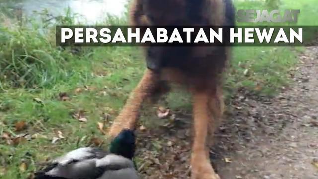 Video yang diabadikan sang pemilik anjing ini menjadi viral dan telah ditonton ribuan kali.