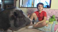Seekor babi Vietnam mendapat ijin khusus menjadi hewan peliharaan untuk membantu menenangkan anak Asperger.