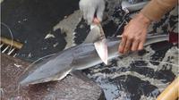 Jika Anda masih ragu untuk tidak mengonsumsi sup sirip hiu lagi di perayaan Imlek, simak di sini beberapa paparan para ahli di Indonesia.