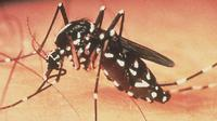 Perusahaan farmasi asal Perancis, Sanofi SA akhirnya mengumumkan kesiapannya meluncurkan vaksin Demam Berdarah Dengue (DBD) pada 2015