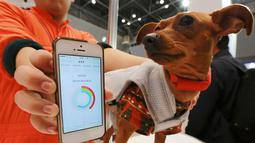"Seekor anjing memakai perangkat komunikasi yang disebut ""Internet of Animals"" yang dikembangkan oleh Japanese electronics venture Anicall di Wearable Expo, Tokyo, Jepang, Rabu (18/1). (AP Photo/Eugene Hoshiko)"