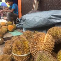 Banyak barang dagangan yang dihargai sangat mahal di Kepulauan Aru, Maluku. Salah satunya durian. (Liputan6.com/Abdul Karim)