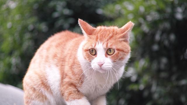 Ciri Ciri Kucing Stres Perhatikan Tingkah Lakunya Dan Ketahui