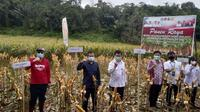 Panen raya benih jagung hibrida varietas JH 37 seluas 11,5 hektare di Desa Leleko, Kecamatan Remboken, Kabupaten Minasaha, Provinsi Sulawesi Utara, Senin (14/9/2020). Dok Kementan