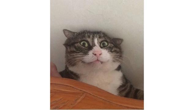 Download 76+  Gambar Ekspresi Kucing Lucu Paling Baru HD