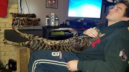 Will Powers dan kucingnya, Arcturus Aldebaran Powers ketika sedang bersantai. Walaupun tubuhnya jauh lebih besar dibanding kucing lain pada umumnya, Arcturus tidak punya banyak perbedaan dengan mereka. (facebook.com/ArcturusAldebaranPowers)