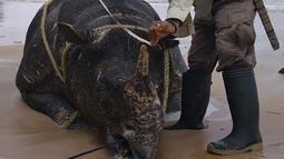 Foto yang dirilis 26 April 2018 menunjukkan petugas memeriksa badak jawa jantan yang ditemukan mati di Pantai Karang Panjang, Taman Nasional Ujung Kulon. Data saat ini populasi badak jawa tinggal 68 ekor terdiri dari 31 betina dan 37 jantan. (AFP Photo)