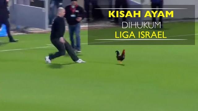 Berita video seekor ayam jantan bernama Rambo yang kena hukuman oleh Liga Sepak Bola Israel karena beberapa kali mengganggu jalannya laga.