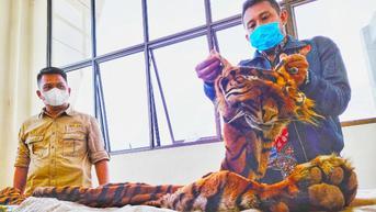 Gerak-Gerik Mencurigakan Pria dan Wanita di SPBU, Ada Kulit Harimau Sumatra di Mobilnya
