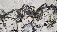 Tumpahan minyak yang tercecer di Pulau Untung Jawa (Foto: Humas Kep Seribu)