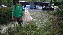Pekerja membersihkan sampah berserakan di taman yang rusak di depan gedung Balai Kota Jakarta, Jumat (14/10). Taman tersebut rusak akibat banyaknya pengunjuk rasa yang menginjak-injak serta duduk di atas tanaman. (Liputan6.com/Immanuel Antonius)