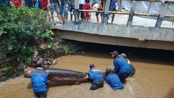 Batang PohonJadiBiang Kerok Banjir di Perempatan Mampang Kota Depok