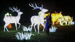 Seorang wanita berpose disamping instalasi cahaya rusa di Chiswick House and Gardens dalam acara resmi penyalaan Festival Lightopia (sesi pemotretan) di London, Inggris (21/1/2020). Lightopia dibuka untuk umum dari 22 Januari hingga 1 Maret. (Xinhua/Han Yan)