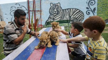 Anak-anak Palestina didampingi seorang pekerja bermain dengan tiga bayi singa yang baru lahir di sebuah kebun binatang di Rafah, Jalur Gaza (8/9/2019). Kehadiran tiga bayi singa ini menambah koleksi satwa sebuah kebun binatang tersebut. (AFP Photo/Said Khatib)