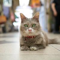 Jepang ciptakan google map untuk kamu yang ingin menjelajah layaknya kucing.