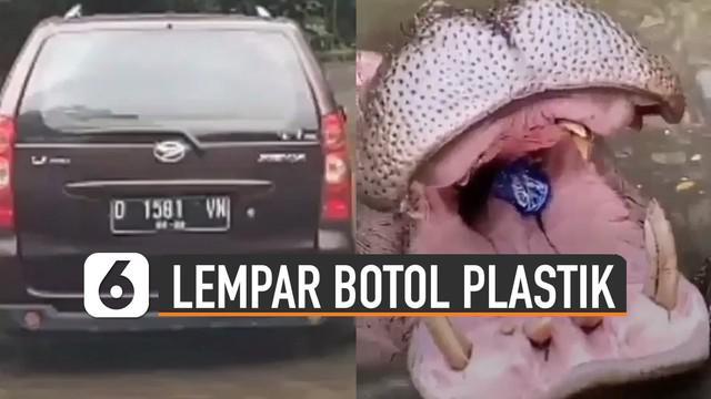 Direkam oleh pengendara mobil dibelakangnya, pengunjung lempar botol plastik ke dalam mulut kudanil.