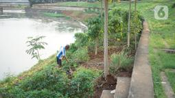 Ismail (67) bercocok tanam di sekitar bantaran Kanal Banjir Timur (KBT), Jakarta, Rabu (10/6/2020). Masa PSBB dimanfaatkan Ismail untuk bercocok tanam dengan menanam berbagai jenis rempah dan umbi-umbian yang hasilnya digunakan untuk konsumsi pribadi. (Liputan6.com/Immanuel Antonius)