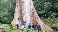 Sebuah pohon berukuran raksasa yang tumbuh di Kabupaten Agam, Sumatera Barat. (Liputan6.com/ BKSDA Sumbar)