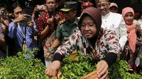 Dengan tanam cabai lewat program urban farming,. Surabaya diharapkan bebas deg-degan saat harga cabai naik. (Liputan6.com/Dian Kurniawan)