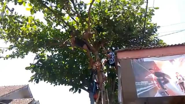 Seorang pria tewas di atas pohon, sesaat setelah tersengat listrik tegangan tinggi.