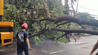 Pohon Tumbang Timpa Mobil di Depok, Dua Penumpang Terluka