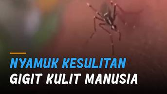 VIDEO: Kocak, Nyamuk Kesulitan Gigit Kulit Manusia