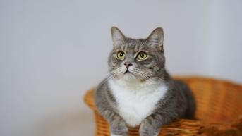 Wanita Ini Tertular Wabah Pneumonia Langka dari Kucing