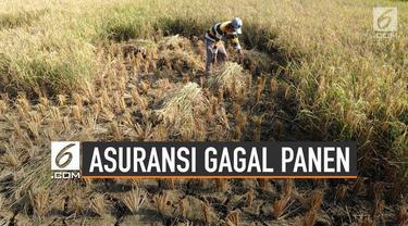 Terdapat Asuransi yang bisa digunakan oleh petani untuk antisipasi gagal panen. Salah satunya bernama program Asuransi Usaha Tani Padi (AUTP).