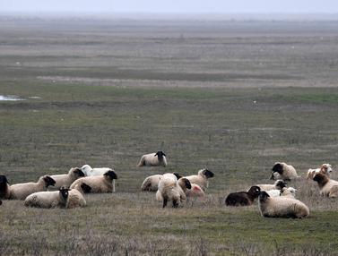 Domba Serbu Area Pangkalan Militer AS di Rumania